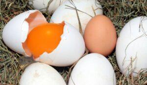 vitamine pour poule pour avoir de beaux oeufs de poules et canards